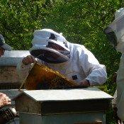 Pour tout le miel du monde