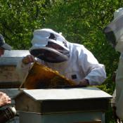 Dernière séance de l'année au rucher