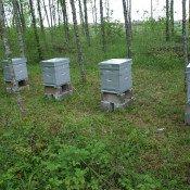 L'abeille chevignoise a trouvé sa « ruche »