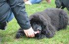Espace Canin, 20 ans d'amis et plus