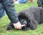 Espace Canin, tel maître tel chien