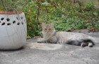 Grande collecte pour Le Chat Libre Dijonnais