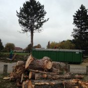 Il y a des pins qui se perdent