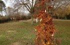 Des arbres et des parrains