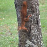 Écureuil en liberté