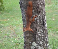 Un écureuil effarouché