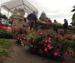 Le marché aux fleurs, un bon «plan» à la clé