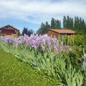 Les jardins familiaux, 40 ans d'histoire