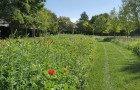 Le labyrinthe, un dédale de fleurs