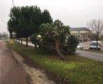 Un arbre à terre