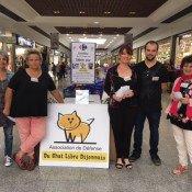 Le Chat libre Dijonnais en mode collecte