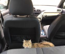 En voiture Nina