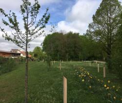 L'arboretum de la Saussaie, un patrimoine végétal