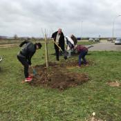 1000 arbres dans la ville, un geste pour demain
