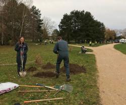 Chevigny : reste 964 arbres à planter