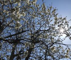 Le sacre du printemps, il faut que tu respires