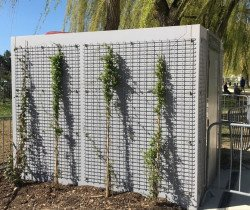 Habillage végétal pour les toilettes publiques